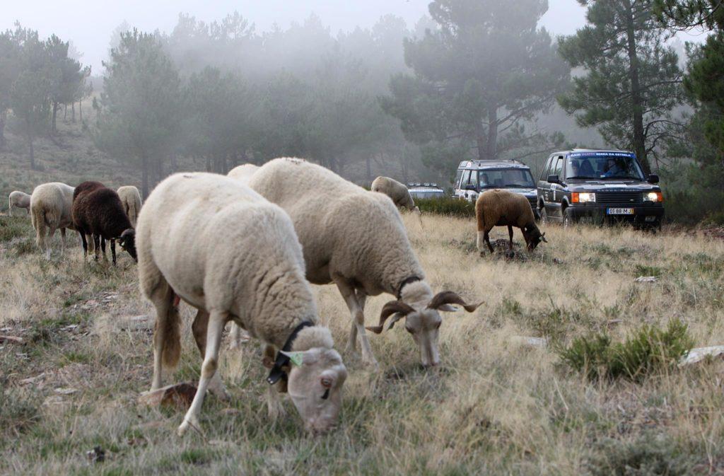 Raid Inatel Serra da Estrela 2009 112