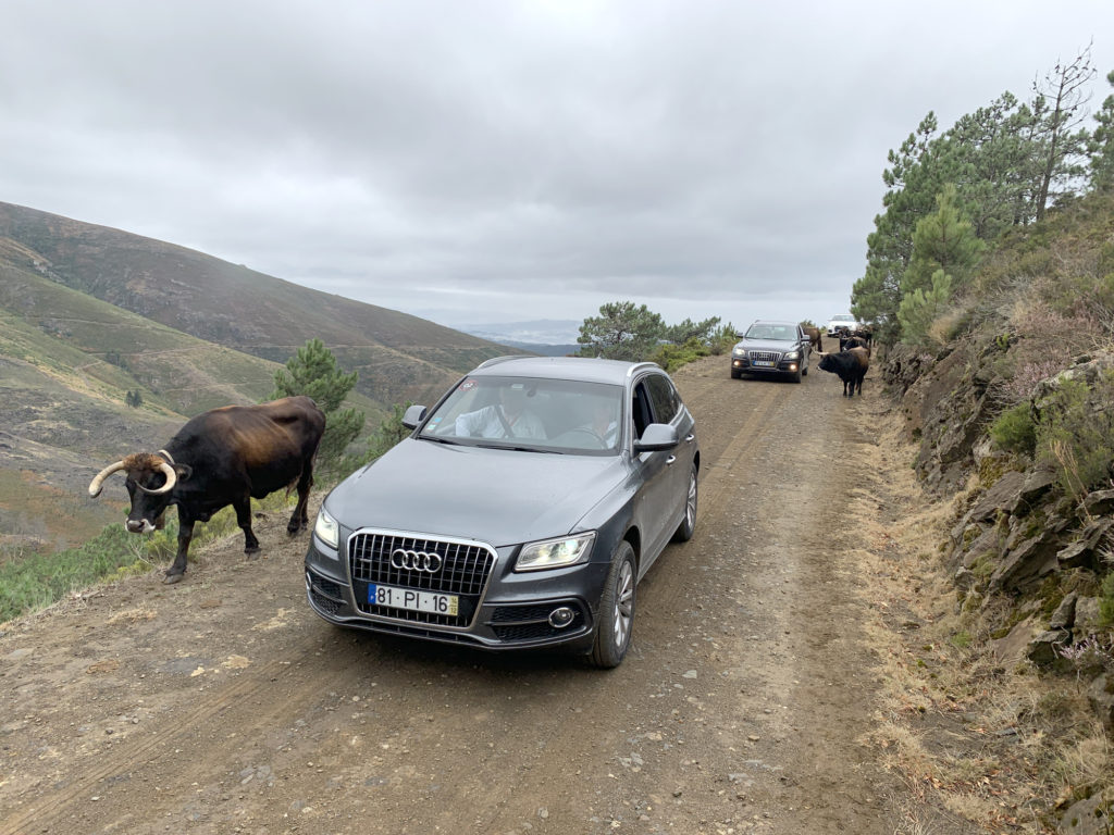 Audi Offroad Experience 2019 9