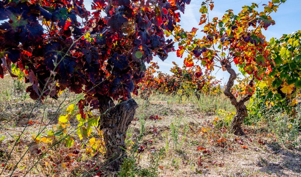 Estrada Nacional 18 Vinhos da Beira Interior 01